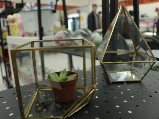 diy terrarium supplies and succulents